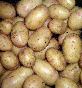 Картофель местный (домашний)