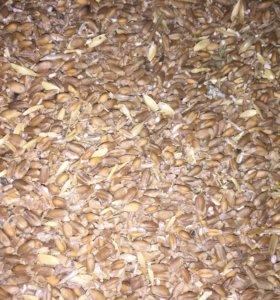 Отходы пшеницы ячменя кукурузы