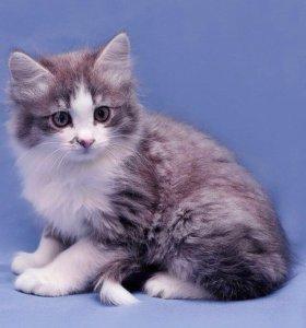 Котёнок Лео, мальчик, 1,5 мес. в дар