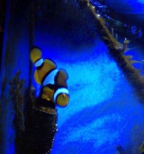 Морская соль+рыбка клоун.