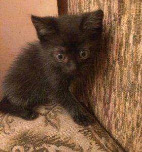 Котёнка девочка