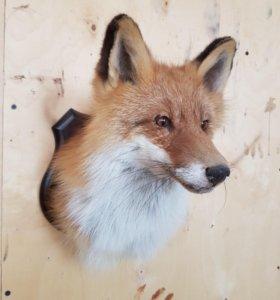 Голова лисицы