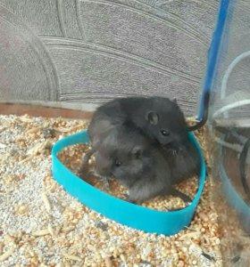 Тушканчики