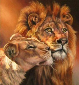 Картина Раскраска по номерам Лев и львица