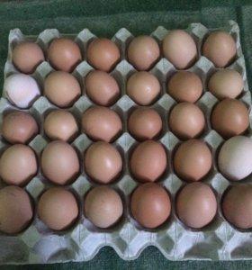 Яйца,домашние 🥚🥚🥚