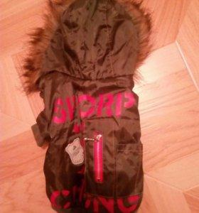 Теплая куртка для маленькой собачки