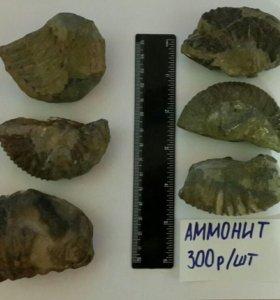 Ископаемые моллюски