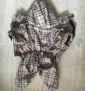 Одежда для собачки