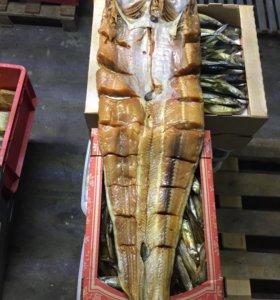 Рыба оптом большой ассортимент
