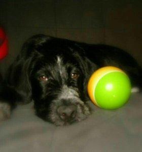 Мафия щенок