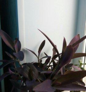 Цветы комнатные....