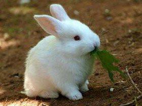 Кролики, крольчата