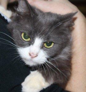 Кошка в добрые руки, кошечка в дар Соня