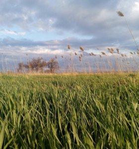 Покос травы, бурьяна