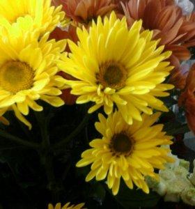 Яркая хризантема
