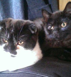 Котик и кошечки подростки