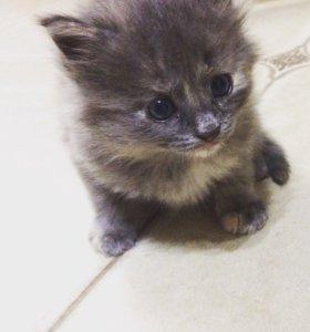 Котята в дар)