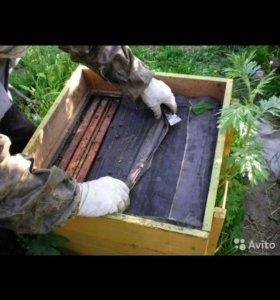 Мёд со своей пасеки. Пасека в сосновоборске урожай