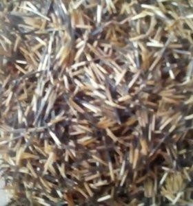 Рассада и семена бархатцы