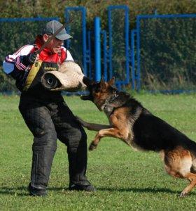 Дрессировка собак с выездом
