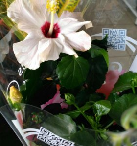 Цветы от 100р под заказ