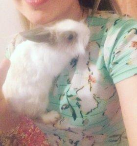 2 Кролика с клеткой