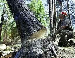 Спил деревьев, уборка участка