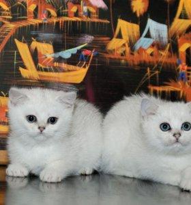 Белые малыши