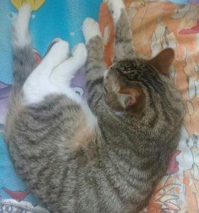 Отдам кота в хорошие руки