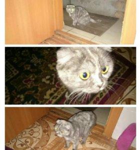 Кошечка бесплатно