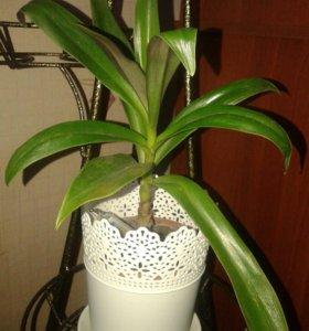Продаю комн.растения,цены на любой кошел.от60)