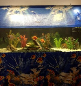 Наведу порядок в аквариуме