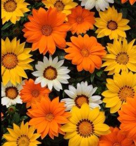 Однолетняя рассада цветов