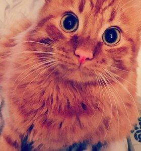 Отдадим в хорошие руки,добрый ласковый кот