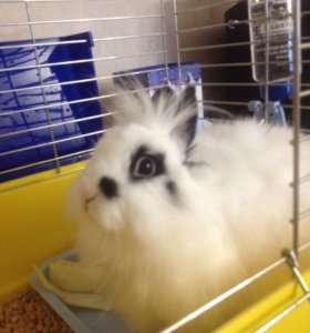 Декоративный кролик Васька))))