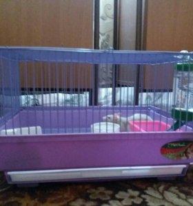 Крыса декоративная вместе с клеткой