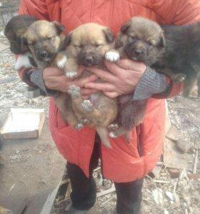 Замечательные щенки