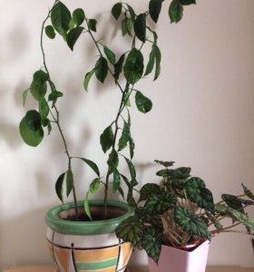 ⛔️👆🏼Комнатные растения