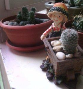 Кактус в кашпо Садовник