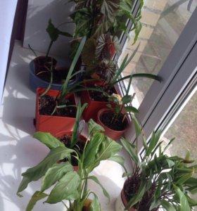 Комнатные растения 🌱