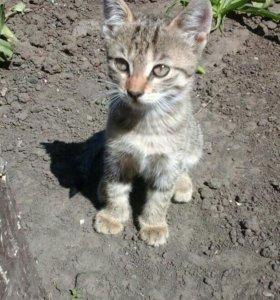 Кошечка 3 месяца)))