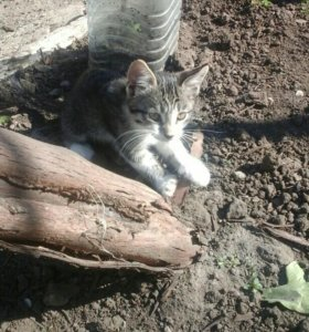 Котик 3 месяца
