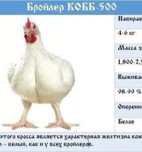 Коб 500