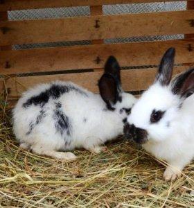 Кролики для выращивания