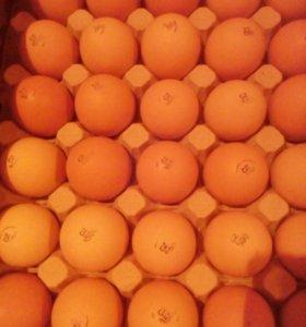 Яйцо инкубационное бройлеров