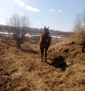 Продам молодыx лошадей разныx возрастов.