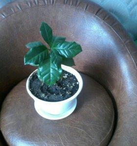 Растения домашние