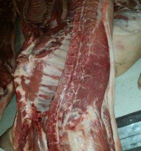 Мясо Свинина в полутушах