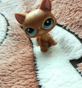 лпс кошка