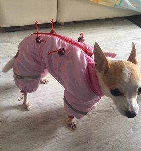 Одежда для 🐶 собаки